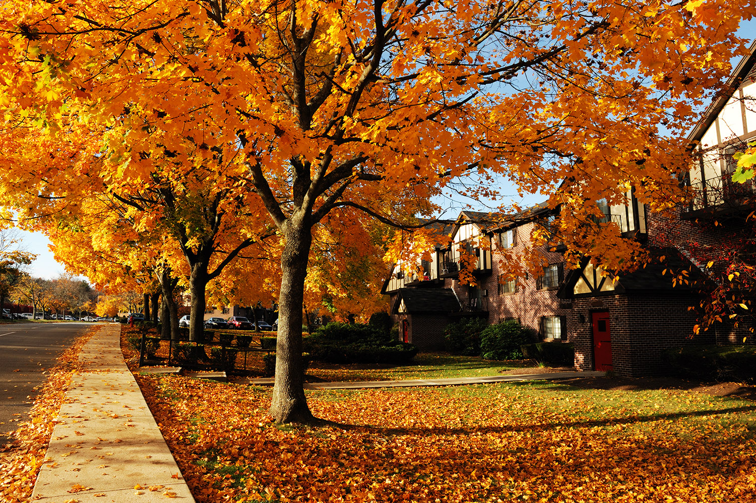 residential area in autumn color